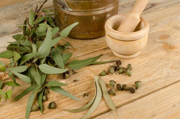 gesund leben Eukalyptusöl Wirkung gewürze und heilpflanzen