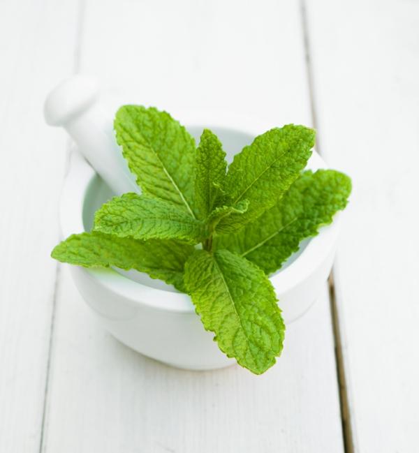 grüne minze blätter gewürzkraut gesund