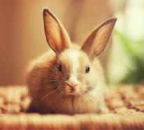 Glückliche Kaninchen stehen vor der Kamera