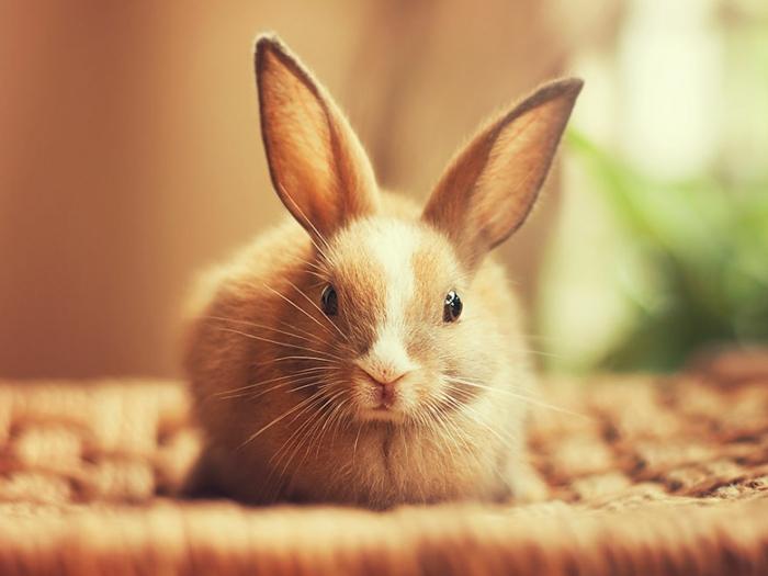glückliche kaninchen bilder das kleine tooni