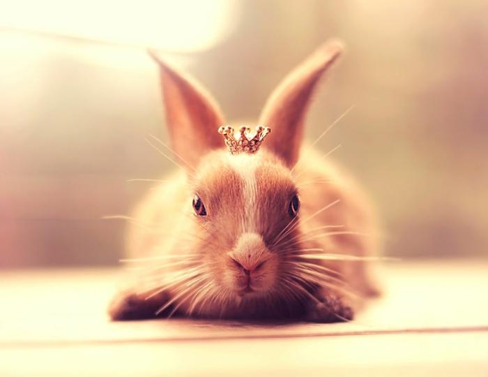 glückliche kaninchen bilder gekrönt