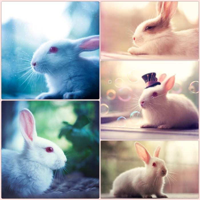glückliches kaninchen bilder hauskaninchen fotografieren