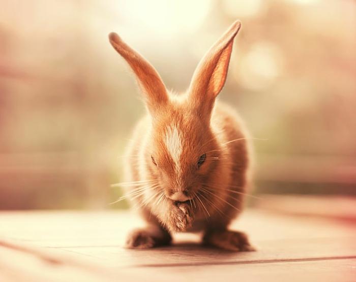 glückliche kaninchen bilder im richtigen moment