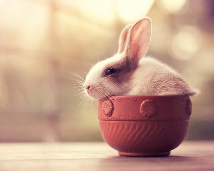 glückliche kaninchen bilder in der teetasse
