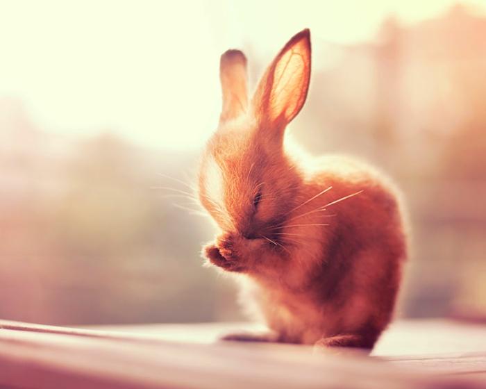 glückliche kaninchen bilder kaninchen verhalten