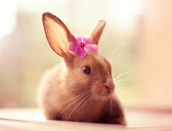 glückliche kaninchen bilder mit blume liebevoll anmutig