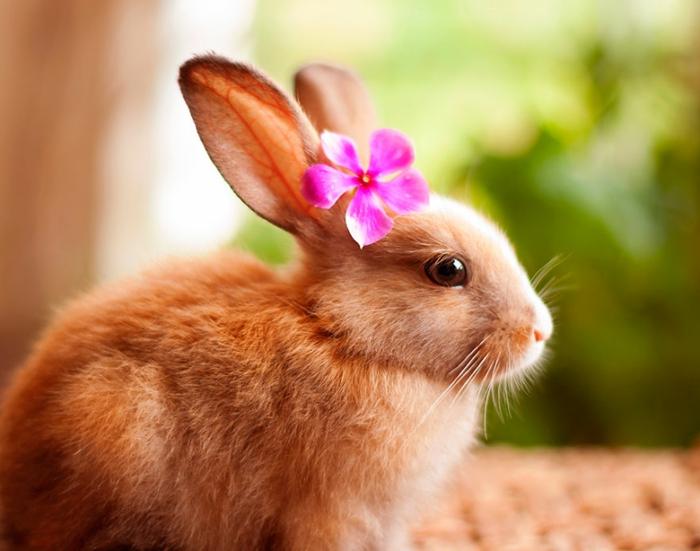 glückliche kaninchen bilder mit blume
