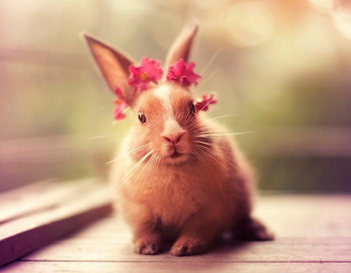 glückliche kaninchen bilder mit blumen verziert
