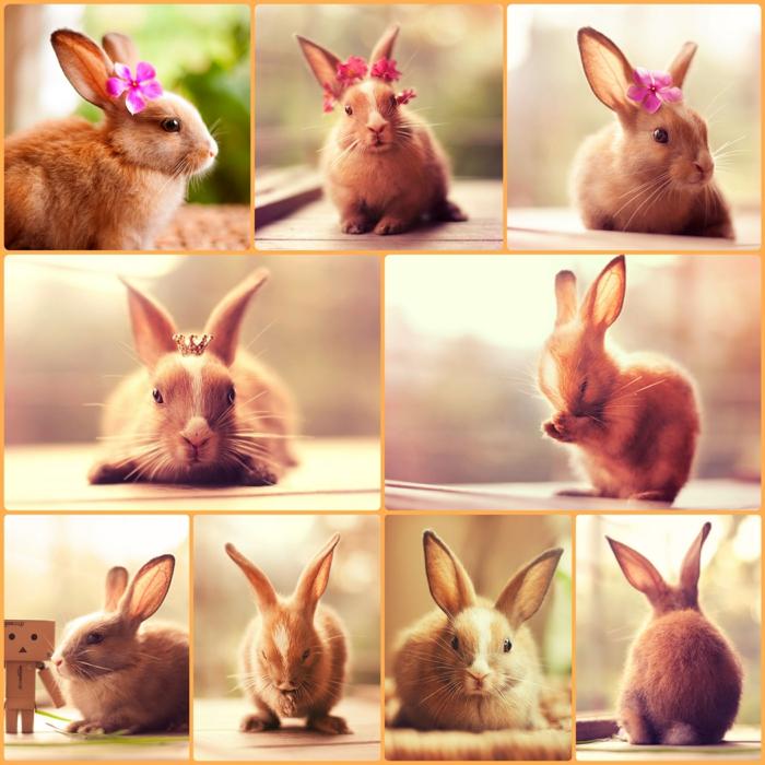 glückliche kaninchen bilder putzige hauskaninchen