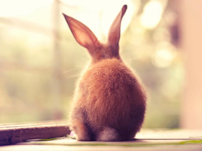 gl ckliche kaninchen stehen vor der kamera. Black Bedroom Furniture Sets. Home Design Ideas
