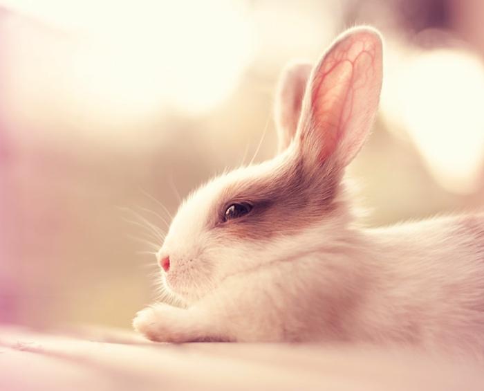 glückliche kaninchen bilder weiß beige