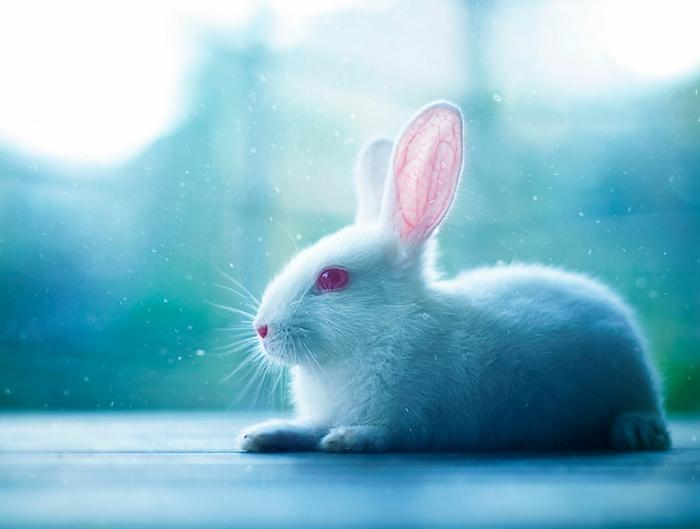 glückliches kaninchen bilder weißes kaninchen im schnee