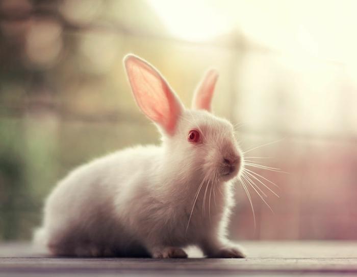 glückliches kaninchen bilder weißes kaninchen rote augen bunny