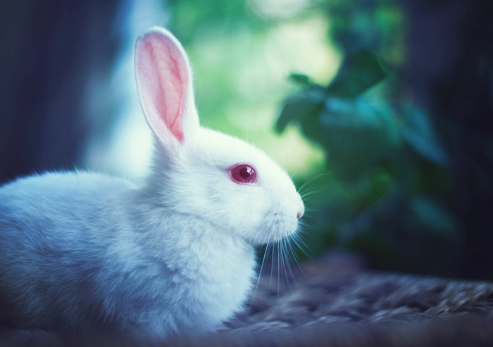 glückliches kaninchen bilder weißes kaninchen ruhig fotografiert