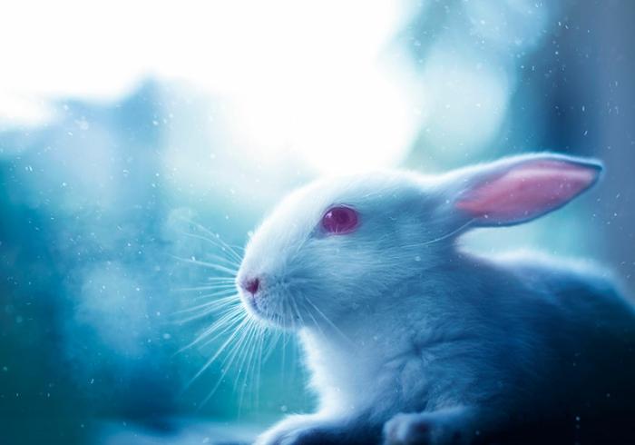 hauskaninchen bilder weißes kaninchen