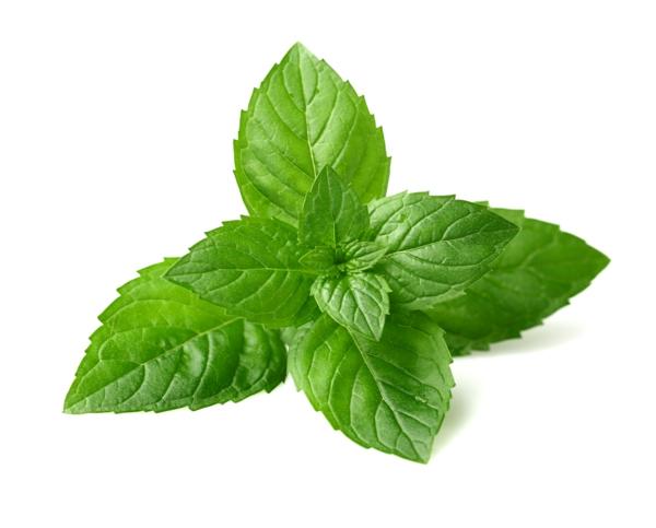 grüne minze gesundes leben ernährung