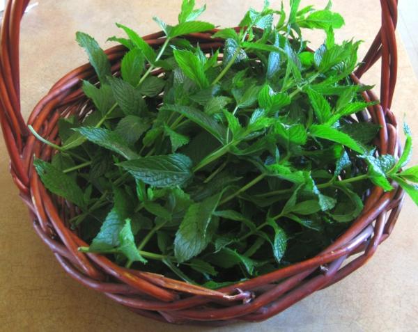 grüne minze tee zubereiten gesundes leben