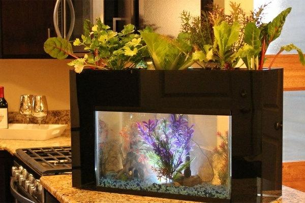 küchendesign aquarium pflanzen dekoideen küche
