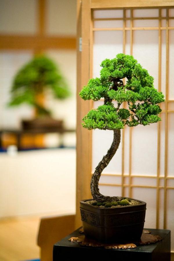 Bonsai Baum Diese Ausgefallene Pflanze Naher Kennenlernen
