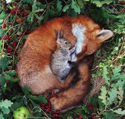 Niedliche Tierbilder Erstaunliche Freundschaften Zwischen Haustieren