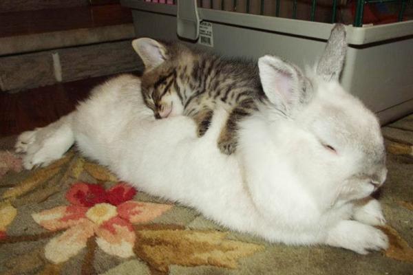 niedliche tierbilder ausgefallene haustiere baby katze und kaninchen