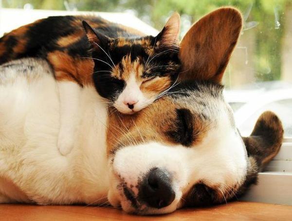 niedliche tierbilder ausgefallene haustiere hund und katze freundschaft