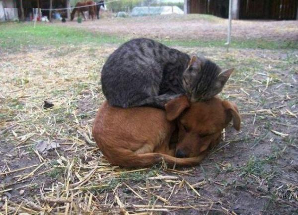 niedliche tierbilder ausgefallene haustiere hund und katze schlafend