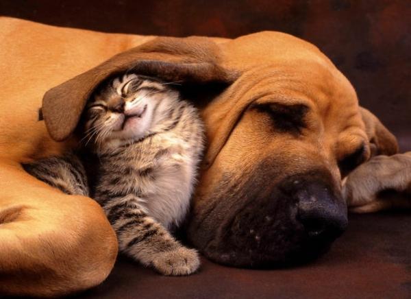 niedliche tierbilder ausgefallene haustiere hund und katze