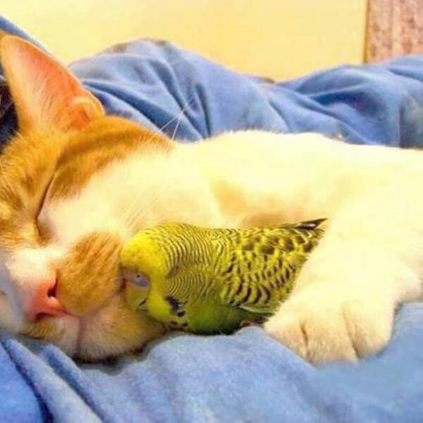 niedliche tierbilder ausgefallene haustiere katze und papagei freundschaft