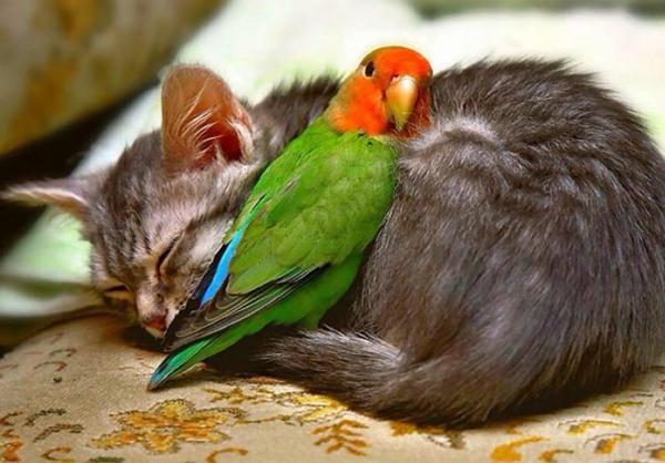 niedliche tierbilder ausgefallene haustiere katze und papagei