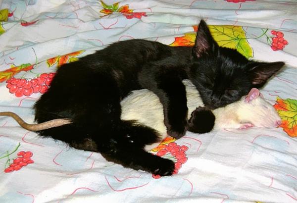 Niedliche Tierbilder: erstaunliche Freundschaften zwischen Haustieren