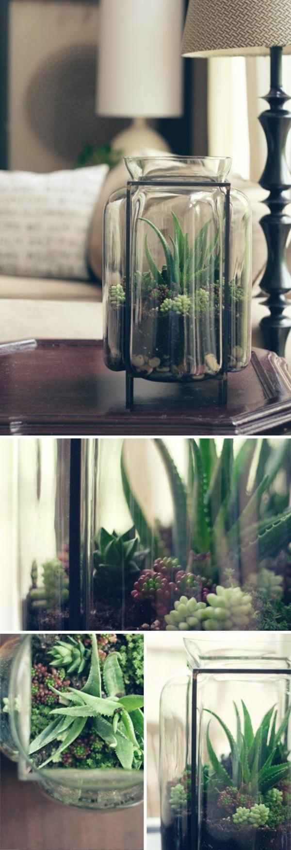 passende terrarium pflanzen glas gefäß moos dekoartikel