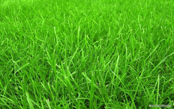 Haus Garten Rasen Steinweg Gras schneiden