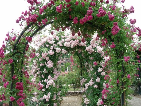 rosen arkaden kleine blüten