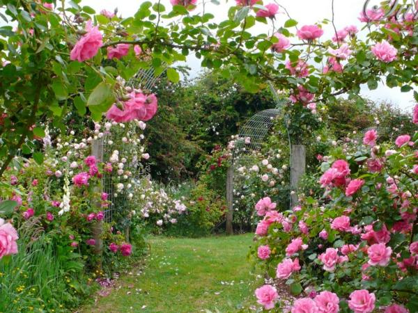 rosen arten metallene arkaden pink