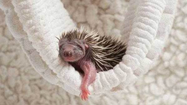 bilder von s en tieren 15 neugeborene baby tiere vor der kamera. Black Bedroom Furniture Sets. Home Design Ideas