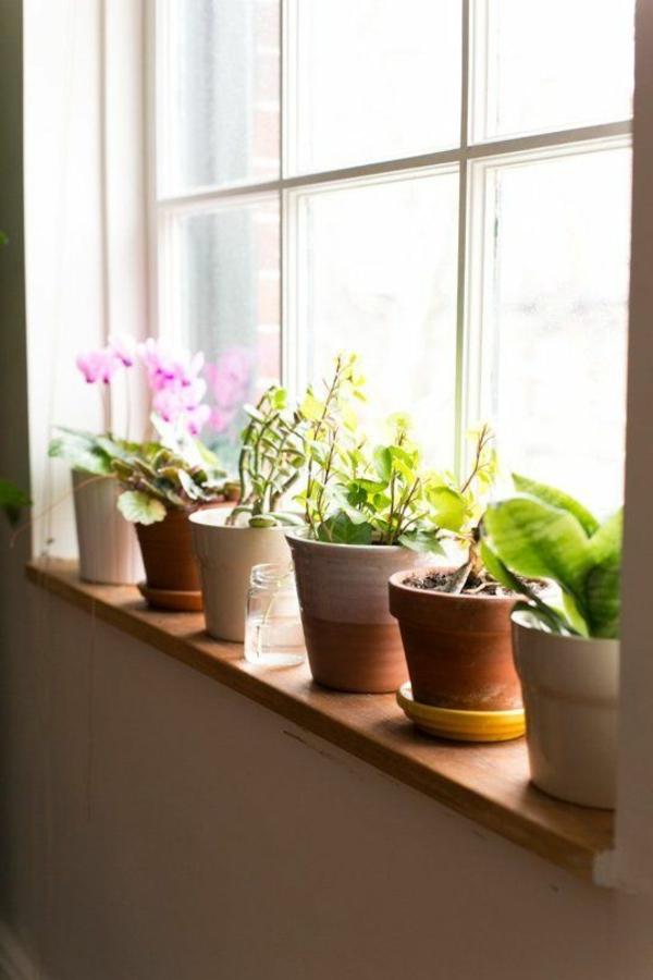 schöne wohnideen pflanzen fensterbank dekorieren