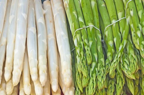 spargel gesund essen spargel arten grüner spargel weißer spargel
