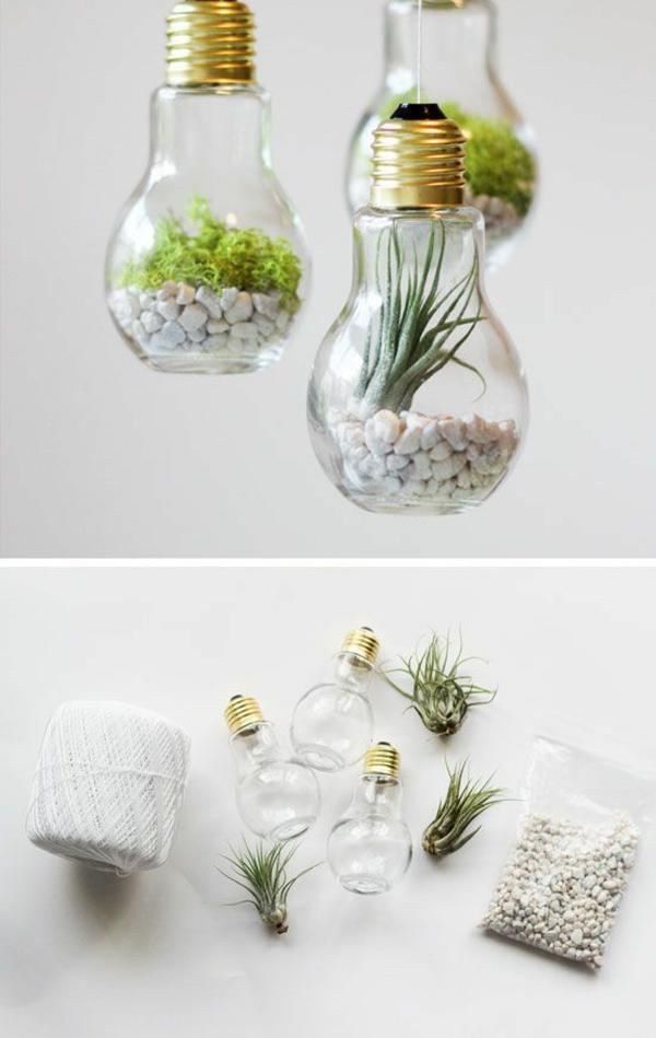 terrarium pflanzen diy projekte mit glühbirnen terrarium selber bauen