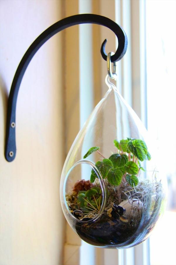 terrarium pflanzen glas gefäß oval hängend wanddeko ideen