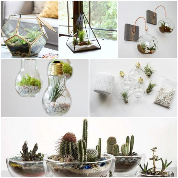 terrarium pflanzen glas gefäße steinchen moos dekoartikel bastelideen