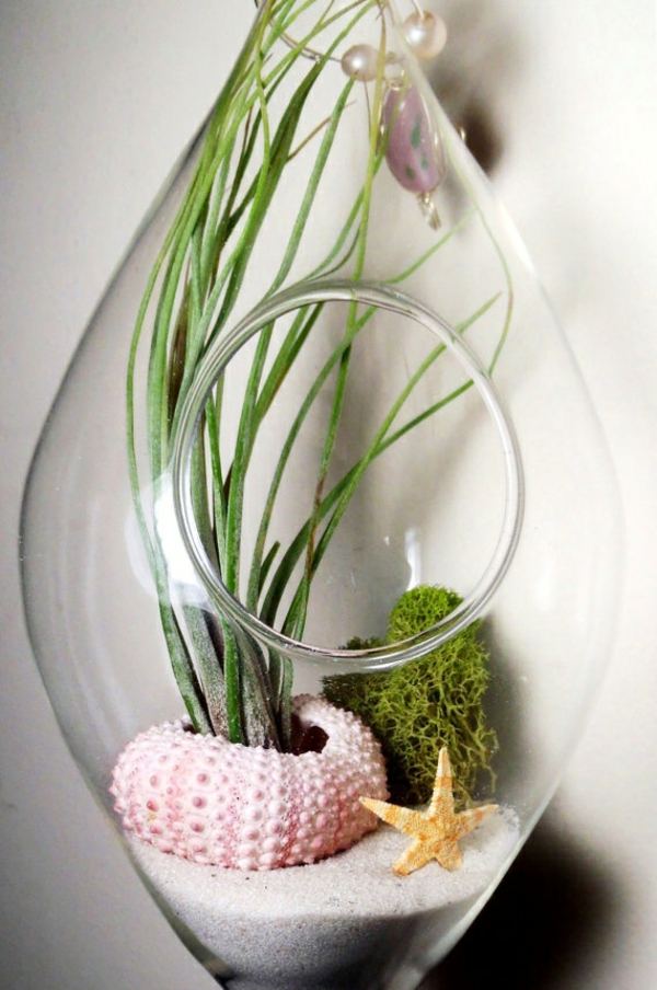 terrarium pflanzen glas gefässe abgerundet mit öffnung meerstern moos