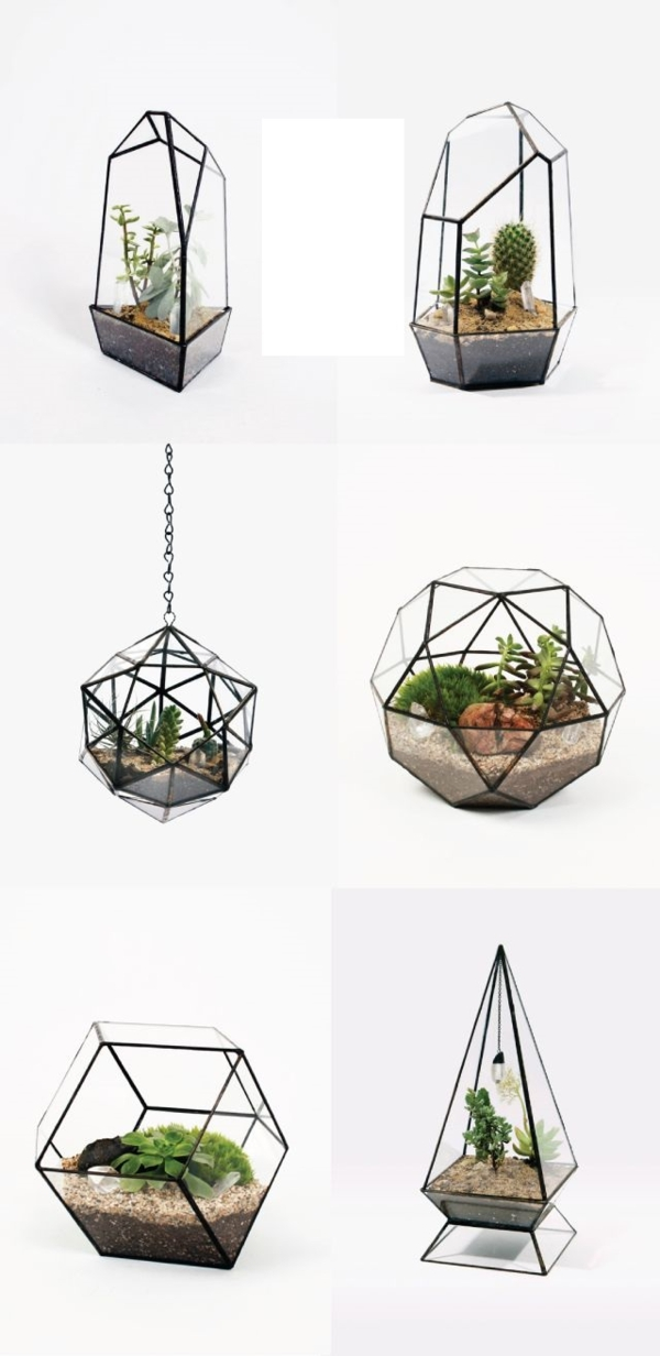 wie baue ich ein terrarium pflanzen und passende glasgef e. Black Bedroom Furniture Sets. Home Design Ideas