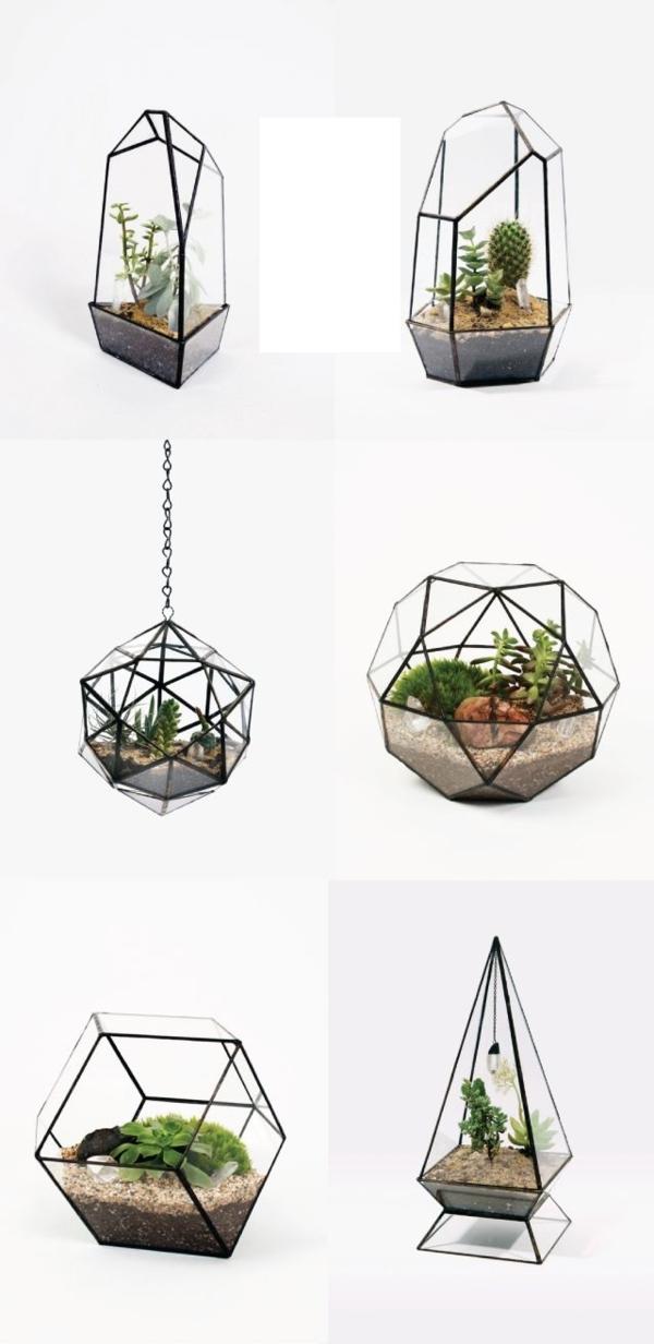 terrarium pflanzen glas gefässe unregelmäßig terrarium selber bauen