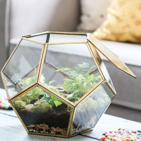 terrarium pflanzen glas gefässe unregelmäßig
