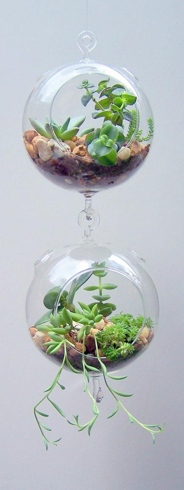 terrarium pflanzen hängende glas gefäße rund