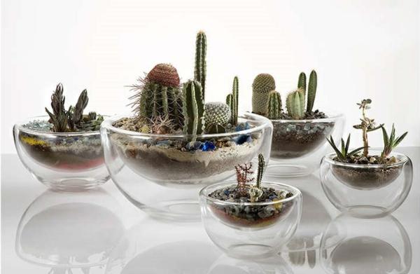 Wie baue ich ein terrarium pflanzen und passende glasgef e for Zimmerpflanzen dekorativ