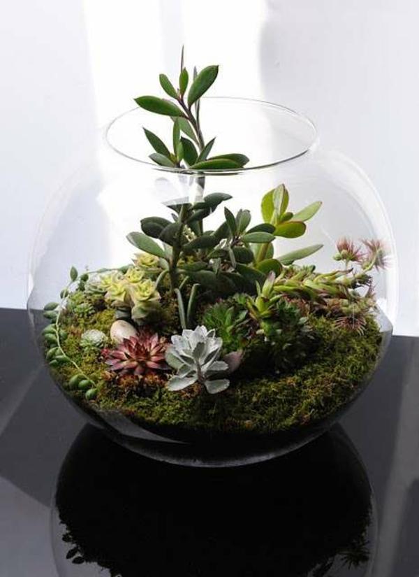 terrarium pflanzen moos glas gefäss terrarium selber bauen zimmerpflanzen