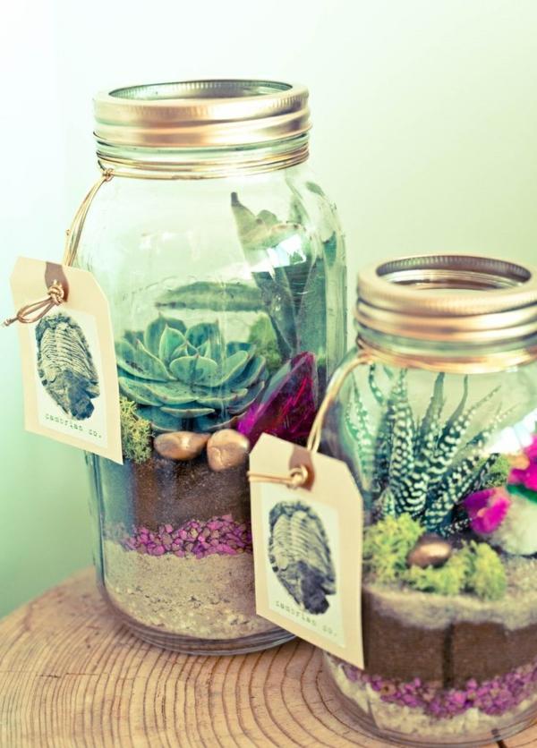 terrarium pflanzen sukkulenten terrarium selber bauen