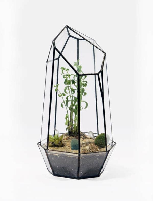 terrarium pflanzen terrarium selber machen zimmerpflanzen pflegeleicht